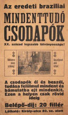 Reymetter Árpád Látványosság Vállalata, a XX. század első felében jelentős szerepet játszott a hazai cirkusz- és varieté világában. A korabeli helyi sajtóból kapjuk a hírt, miszerint a csodapók eljutott Mátraalja nyugati szegletébe is, vagyis a pesti plakát nem véletlenül került a hatvani múzeumba. A csodapókot legutoljára egy hatvani hölgy látta, 1944-ben.