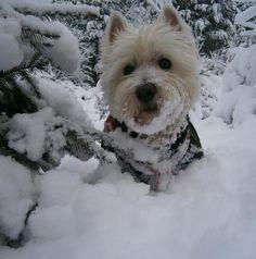 Snow, snow, snow!!