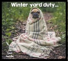 35 Adorable Pets Who Snuggled With Their Blankies - Mr. Cute Animals - Love this funny pug! Animals And Pets, Funny Animals, Cute Animals, Wild Animals, Funniest Animals, Pretty Animals, Baby Animals, Dressage, Cat Dog
