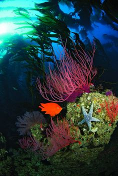 40 Reasons We Love Diving in the USA | Best Diving in the World | Local Dive Sites in America | Scuba Diving