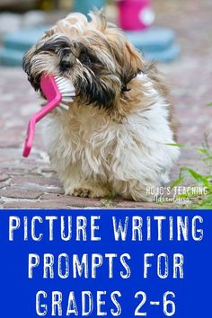 Funny Picture Writing Prompts Picture Writing Prompts can be a LOT of fun in your and grade classroom or homeschool! Click through to see where to find a HUGE collection of funny picture prompts that you can use with your students