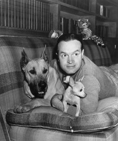 circa 1945: British-born American entertainer Bob Hope (1903 - 2003) lying on a sofa cuddling with a Great Dane and a Chihuahua. (Photo by Hulton Archive/Getty Images)