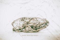 Fine art print of spotted genet skull