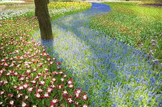 Hitachi Seaside Park in Japan DSC_0379 by shingo, via Flickr