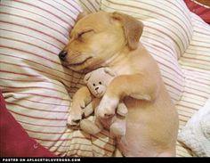 Hello, I am a cute puppy snugglin my teddy bear, who keeps away my bad dreams. Thanks, teddy bear.