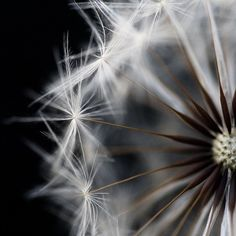 How is it that dandelions can be so beautiful in photos and so NOT in my yard???