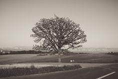 #tree #landscape #sky