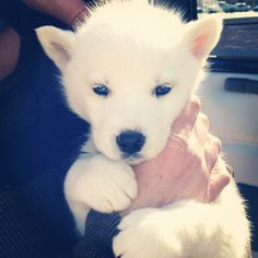 #puppy #husky the most adorable baby ever :)