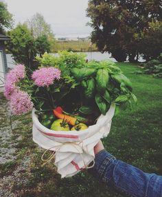 Gifts from the garden 🌸🌶🍅🌱🌿 #garden#harvest#growfood#backyardgardening#peppers#heirloomtomatoes#heirlooms#organic#nongmo#niagara#localfood#gardening#vegetables#vegetablegarden