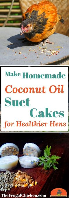 Homemade suet cakes for chickens take less than 15 minutes to craft (and just pennies), but your hens will devour them! Organic, non-GMO DIY treats for reducing bad behaviors and boosting their heath. Chicken Coops Homemade, Portable Chicken Coop, Chicken Coop Plans, Building A Chicken Coop, Chicken Tractors, Raising Backyard Chickens, Keeping Chickens, Backyard Farming, Pet Chickens