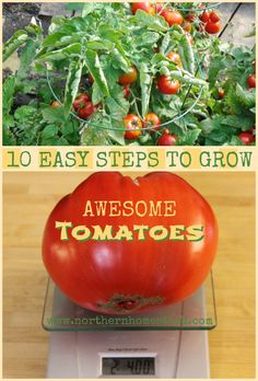 10 Easy Steps To Grow Awesome Tomatoes - Busy Mama 911