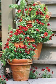 Container Gardens: Step Up to Color