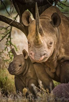 ***WORLD RHINO DAY*** Sadly. In just a decade, more than African rhinos have been lost to poaching! NO ONE, we repeat, NO ONE in the world needs a rhino horn, but a rhino! Animals And Pets, Baby Animals, Cute Animals, Animals Images, Beautiful Creatures, Animals Beautiful, Animal Original, African Animals, African Safari