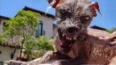 World's Ugliest Dog
