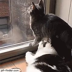 This cat takes his window watching very seriously