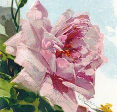 Catherine Klein Pink Rose No 3 Repro Greeting by KatyDidsCards, $2.99