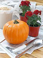 01plant in pumpkin Beautiful Creativity: Fall Flowers Planted in a Pumpkin