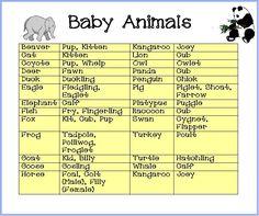 baby animal names - Buscar con Google