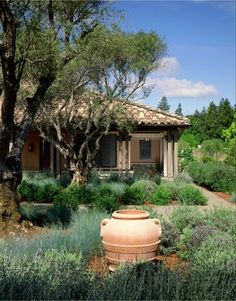 Lavender Garden mediterranean landscape