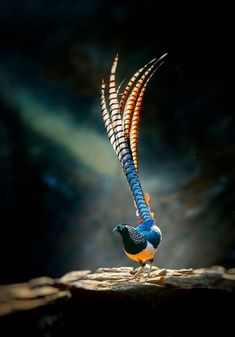 Can anyone id thid bird? I can't find it anywhere. Yes, it's Lady Amherst's Pheasant. Rare Birds, Exotic Birds, Colorful Birds, Pretty Birds, Beautiful Birds, Animals Beautiful, Beautiful Pictures, Nature Animals, Animals And Pets