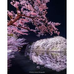 【衝撃 impact】 Editor's Choice Photos | TOKYO CAMERA CLUB
