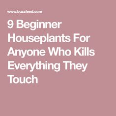 9 Beginner Houseplants For Anyone Who Kills Everything They Touch