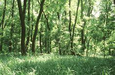 Égeres láperdő (Dryopteridi-Alnetum) (Turcsányi Gábor felvétele) Trees, Plants, Photography, Painting, Photograph, Tree Structure, Fotografie, Painting Art, Photoshoot