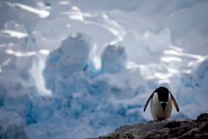 Chilling Photographs of the Endangered Polar Regions Show the Havoc of Climate Change - http://blog.dashburst.com/pic/polar-regions-climate-change-camille-seaman/
