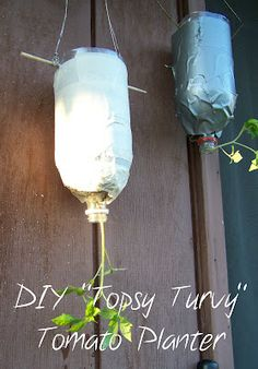 """DIY """"topsy turvy"""" or upside down planter for tomatoes!"""