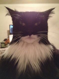 This cat looks like Batman I couldn't stop laughing when I saw this!  BatCat