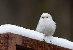 This little white bird.