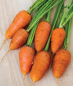 • 2016 • Caracas Hybrid Carrot Seeds - Vegetable Seeds and Plants at Burpee.com