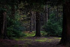Stars 14 by Ellie Davies - Susan Spiritus Gallery Fairy Tale Forest, Fairy Tales, Forest Photography, Landscape Photography, Real Life Fairies, Forest Background, Forest Illustration, Photo Illustration, Witch Aesthetic