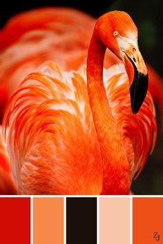 ZJ Colour Palette 91 #colourpalette #colourinspiration