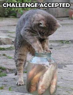 Hilarious cats and kittens, cat humour. For the funniest pet cats images as well as quotes go to www. Funny Cats, Funny Animals, Cute Animals, Cute Kittens, Cats And Kittens, I Love Cats, Crazy Cats, My Bebe, Tier Fotos