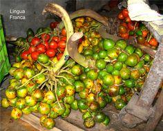 the noble Panamanian fruit - The Peach Palm Fruit