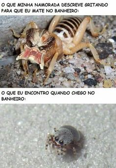 How GF Describes Spider In Bedroom What I Find In Bedroom - Funny Memes. The Funniest Memes worldwide for Birthdays, School, Cats, and Dank Memes - Meme Funny Animal Memes, Funny Animals, Funny Jokes, Cute Animals, Hilarious, Memes Humor, Stupid Funny, Funny Cute, Funny Images