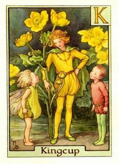 Kingcup Flower Fairy Vintage Print by Cicely Mary Barker. first published in London by Blackie, 1934 in A Flower Fairy Alphabet. Also called marsh marigold.