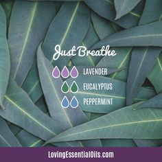 10 Diffuser Blends for Allergies - Essential Oils for Allergy Relief health essential oils Essential Oils For Breathing, Stress Relief Essential Oils, Essential Oils Guide, Doterra Essential Oils, Mixing Essential Oils, Pine Essential Oil, Essential Oil Diffuser Blends, Eucalyptus Essential Oil Uses, Essential Oils Allergies