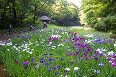 Sanctuaire Meiji, Japon | Le Sanctuaire Meiji : quand la spiritualité honore... Okaeri Japan ...