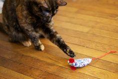 DIY Cat Toy tutorial