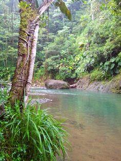 La rivière corossol