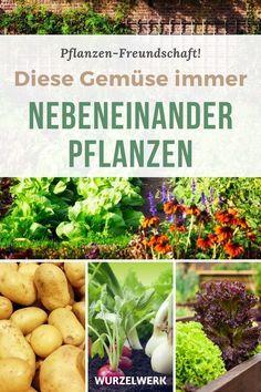 Garden Deco, Balcony Garden, Garden Plants, Natural Garden, Urban Farming, Planting Seeds, Garden Styles, Permaculture, Garden Projects