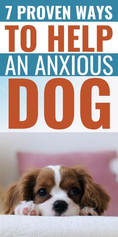 These are the practical ways that you can do to help your dog overcome anxiety! Dog Psychology, Dog Stress, Dog Anxiety, Dog Cookies, Dog Language, Dog Rules, Dog Care Tips, Dog Hacks, Dog Behavior