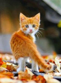 Autumn kitty…….