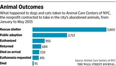 Animal groups are cutting ties with new york city shelter operator http://on.wsj.com/1IAL9zj