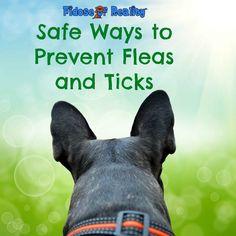 Safer Ways to Preven