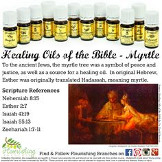 Young Living Essential Oils: 12 Oils of Ancient Scripture Healing Oils of the Bible - Myrtle https://www.youngliving.org/hansen66