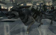 Mw3 attack dog