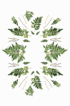 Neatly Organised: Ferns Pattern